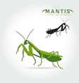 green mantis vector image