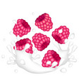 red ripe raspberry and a splash of milk or yogurt vector image