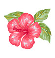 tropical hibiscus flower vector image