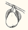 pear vintage engraved vector image