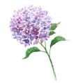 Branch of violet hydrangea vector image vector image