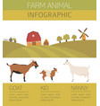 goat farming infographic template animall family vector image vector image