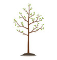 young tree isolated vector image vector image