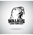 Walrus logo template for sport teams vector image