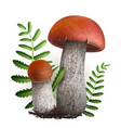 boletus mushrooms vector image vector image