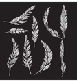 Collection of white feathers vector image