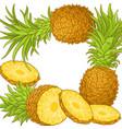 pineapple fruit frame vector image