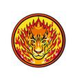 flaming tiger head icon vector image