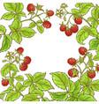 raspberry branch frame vector image vector image