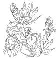 sketch with iris flowers vector image vector image