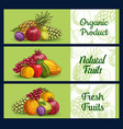 tropical fruits banners sketch farm market food vector image