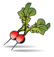 Freehand drawing radish icon vector image vector image