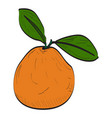 isolated peach vector image