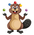 beaver juggling on white background vector image vector image