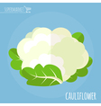 Cauliflower Long shadow flat design icon vector image