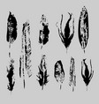 grunge bird feathers set isolated vector image vector image