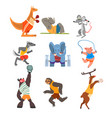 animals doing exercise kangaroo hippo wolf vector image vector image