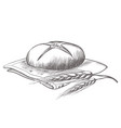 hand drawing of round bread isolated vector image vector image
