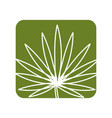 label tropical plant with leaves in the botanic vector image vector image