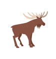 moose isolated vector image vector image