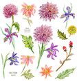 Spring floral collection watercolor beautiful vector image vector image