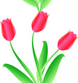 elegance seamless color tulips pattern vector image vector image