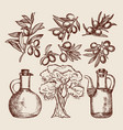 olive oil in bottling olive tree and other hand vector image