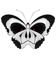 terrible butterfly vector image