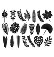 tropical black paper cut leaves trendy summer vector image