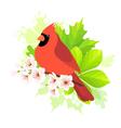 Spring cardinal vector image