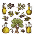 colored of different olive products vector image vector image