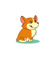 cute dog of welsh corgi of vector image vector image