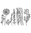 field flowers with leaves set wedding vector image vector image