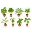 isometric plant palm trees in a pot isolated on vector image