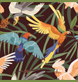 seamless tropical pattern with parrots in jungles vector image
