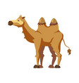 cute camel animal trend cartoon style vector image