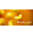 honeydew melon sweet fruits vector image vector image