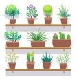 indoor plants in pots flat icons set vector image vector image