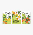 packaging templates with tropical citrus fruits vector image