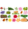 set isolated leaves and flowers vector image vector image