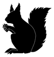 squirrel vector image