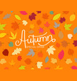 autumn special offer color fall leaves vector image vector image