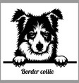 border collie - peeking dogs - - breed face head vector image