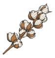 cotton plant branchline art sketch vector image