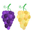 flat grape isolated on white background vector image vector image