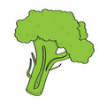 isolated broccoli vector image vector image