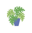 potted monstera palm plants flat icon vector image vector image