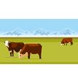 Farm cows vector image