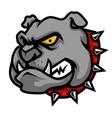 bulldog head mascot in cartoon style vector image