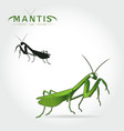 green mantis vector image